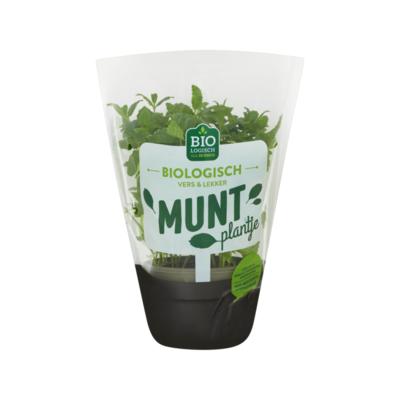 Jumbo Biologisch Munt Plantje