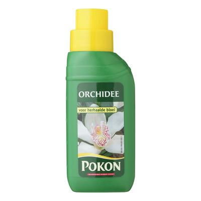 Pokon Huis orchidee